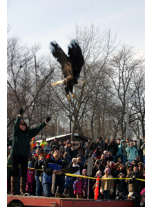 Marge Gibson releasing the eagle.